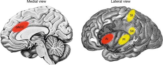 brain-view